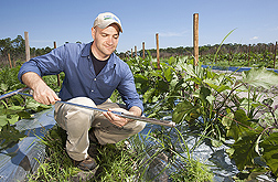 Photo: Former ARS research associate David Butler collects a soil sample from a field of eggplants. Link to photo information