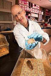 Photo: ARS molecular geneticist Robert Waterland holding a mouse. Link to photo information