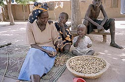 Photo: Gambian woman shells peanuts as she sits with three young children. Link to photo information