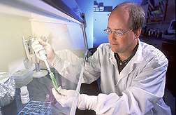 George Vandemark isolates a DNA sample for identification using polymerase chain reaction. Link to photo information