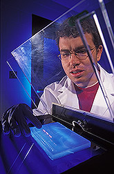 Photo: cientist using gel electrophoresis to clone sorghum genes. Link to photo information