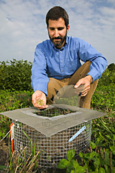 Adam Davis displays some giant ragweed seeds while crouching beside a small field cage used to determine weed-seed consumption by various small animals. Link to photo information