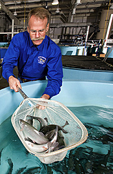 Photo: Scientist scooping trout out of a tank. Link to photo information