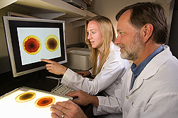 Photo: Scientists studying images of a fungus for orange pigment. Link to photo information