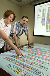 Photo: Two researchers review genomic map. Link to photo information