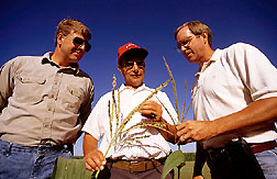 Grower Royce Anderson, consultant Paul Groneberg, and ARS scientist Mark Westgate: Link to photo information