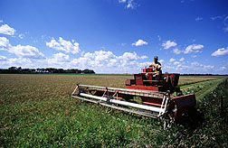 Farmer uses field equipment to windrow wheat. Link to photo information