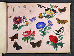 Sketch of flowers and butterflies drawn by Charles Valentine Riley. Link to photo information