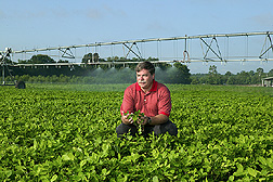 Dean Evans inspects young peanut plants; sprinkler system in background. Link to photo information