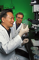 Jong Kim and Bruce Campbell observe lab-dish tests showing effects of gallic acid on genes that control aflatoxin production. Link to photo information