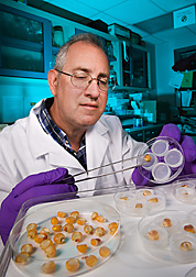 Photo: Technician working with corn kernels in a lab. Link to photo information