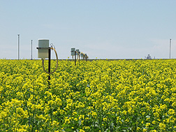 Photo: A field of canola in Akron, Colorado with instruments to measure water use, yield and other data. Link to photo information