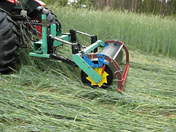 Photo: Roller with smooth drum smashes down a rye cover crop. Link to photo information