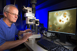 Photo: ARS microbiologist Mark Jackson evaluates spore production by Metarhizium anisopliae. Link to photo information