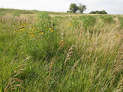 Nebraska prairie.  Link to photo information