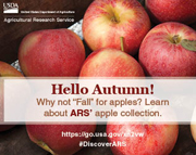 Learn About ARS' apple collection