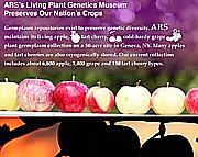ARS's Living Plant Genetics Museum