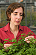 Microbiologist examines cilantro