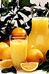 Oranges and pitcher of orange juice
