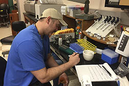 ARS technician, Jace Everette prepares rice samples in the lab
