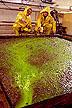 Green dye measures flow velocity