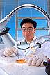 Determining bacterial contamination in alfalfa seeds