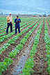 Researchers evaluating sugar beet breeding lines.