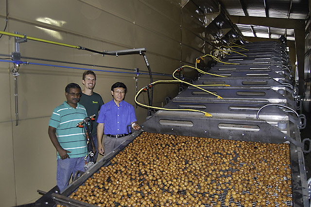 Scientists inspect walnuts in infrared heater