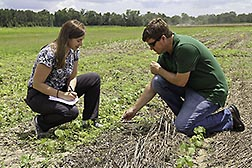 Two ARS scientists in a cotton field