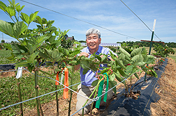 A scientist puts a clamp on trellis wire and blackberry cane