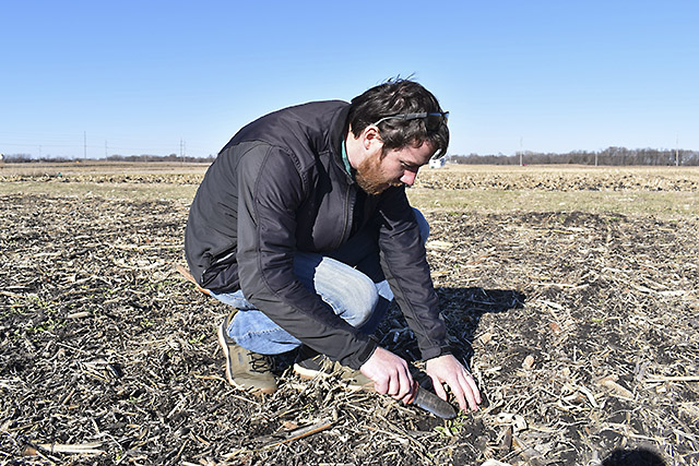 ARS scientist kneeling looking at a winter camelina cover crop