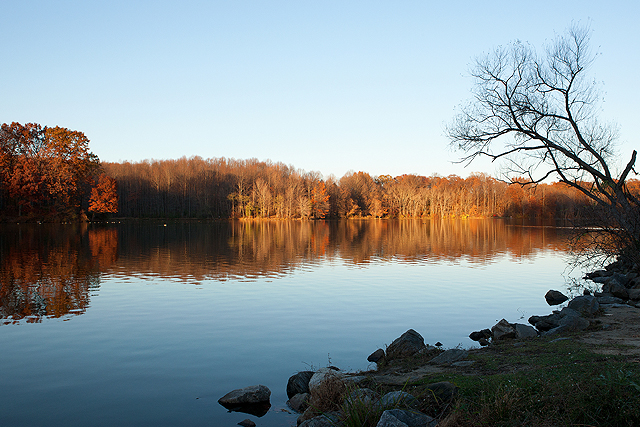trees around a lake with fall foliage