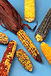 Various mutations of corn