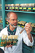 Examining cultures of different root pathogens