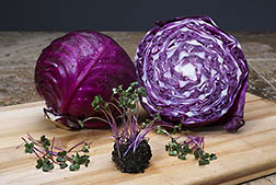 Red cabbage microgreens and mature red cabbage. Link to photo information