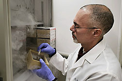 Chemical engineer Pat Slininger adds a specialty sugar called isomelezitose to bacteria to test the sugar's cell-protecting properties.