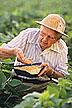Agronomist Edgar E. Hartwig