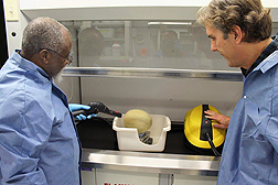 ARS researchers steam clean a cantaloupe. Link to photo information