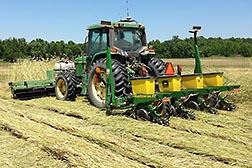 A tractor rolls a rye cover crop and plants cotton seeds at the same time. Link to photo information