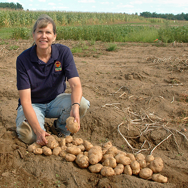 scientist holds harvested hybrid potatoes in a field