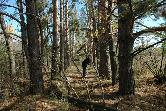 graduate student collecting tree tissue samples