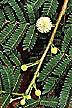 Lead tree