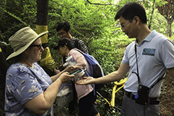 A USDA researcher and Chinese researcher photograph a parasitized SLF nymph while other researchers check a trap