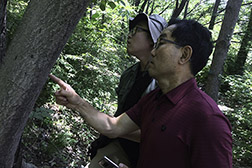Korean scientists/collaborators look for spotted lantern fly egg masses on a tree in Anyang, Korea