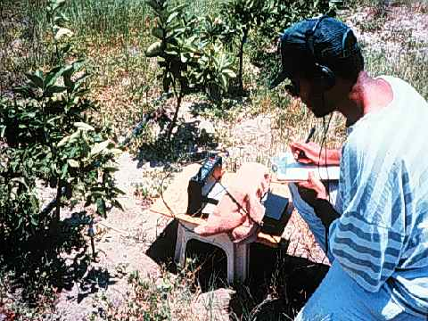 Photo with caption that reads: A researcher uses a recorder and amplifier to monitor an orange tree for insect infestation.