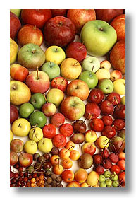 Photo showing a variety of apples.