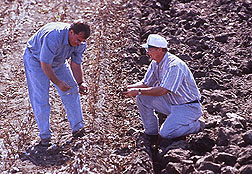 Photo of two researchers in a plowed field checking the soil for worms.