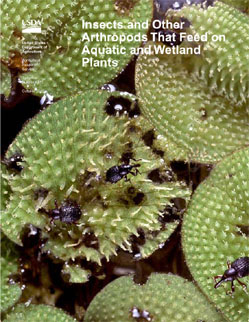 Cover showing Adult salvinia weevils on Salvinia minima: Click here to view publication online (pdf file).