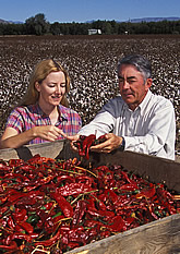 Ed Hughs and Stephanie Walker inspect chilis cleaned by experimental cleaner. Link to photo information