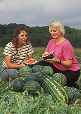 Penelope Perkins-Veazie and Shelia Magby examine a freshly sliced mini-watermelon. Link to photo information